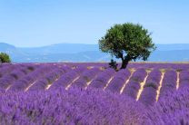 provence_13